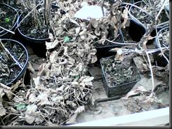 Poor helpless plants